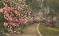 Albertype Charleston South Carolina Magnolia Court hand colored Postcard 10146