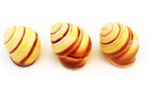 "3 Small Yellow Land Snail Shells 3/4""-1"" (18-25mm) Seashells Hermit Crabs Beach"