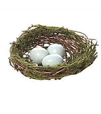 Bird's Nest with Blue Eggs