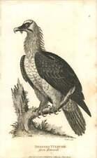 1808 Gypaète barbu de Edwards gravé oiseau Plaque-Shaw