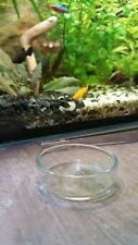 Clear Glass Dish Shrimp Feeder
