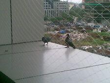 ANTI BIRD NET 4 FOOT  X 6 FOOT HIGH QUALITY NET IN WHITE COLOUR