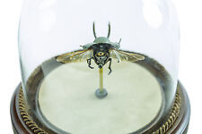 Insect Lab Authentic Lucani Beetle Watch Hybrid Robot Collection