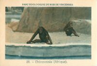 Singe Chimpanzé Pan Chimpanzee Parc Zoologique de Vincennes Zoo IMAGE OLD CARD