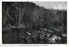 Antique print Blackwater river Florida United States 1869 holzstich