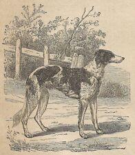 A3869 Cane da caccia - Incisione - Stampa Antica del 1887