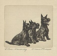 Scottish Terrier - Vintage Dog Print - 1936 Diana Thorne