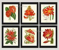 Unframed Botanical Wall Art Print Set of 6 Antique Red Flowers Home Room Decor