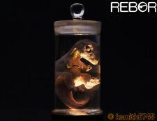 Rebor TYRANNOSAURUS FOETUS SPECIMEN JAR light up model T REX dinosaur ornament