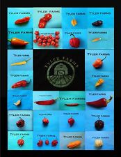15+ Mystery Pepper Seeds (mixed hot, sweet, rare, exotic, & organic chili seeds)