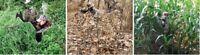 NEW Ghost Blind Predator Hunting 4-Panel Bow Crossbow Gun Camo Mirror Blind