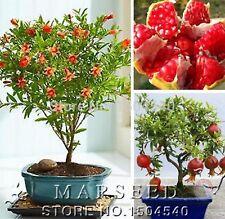 20Pcs BONSAI POMEGRANATE Seeds, Rare Plants Delicious Fruit Flower Seeds