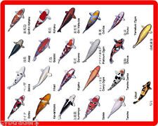 Koi Fish Color Names Identification  Refrigerator / Tool  Box  Magnet