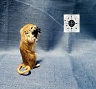 """Freeze Dried Gerbil...""""Target Practice""""...Sitting Upright...Taxidermy Mount"""