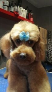 Dog Bows - 12 Double Bowed, Assorted Colours & Elasticated, Top Knot Bows