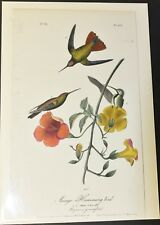 AUDUBON'S BIRDS of AMERICA - MANGO HUMMINGBIRD - First Edition Octavo Plate 251