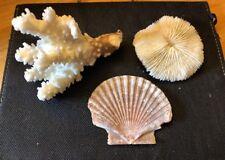 REAL Vtg Brown Stem Coral, Seashell, Mushroom Ocean Specimen Nautical Aquarium