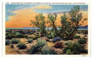 Salton Sea, CA Smoke Trees Postcard *5N1
