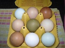 6 x mixed layers hatching eggs lf