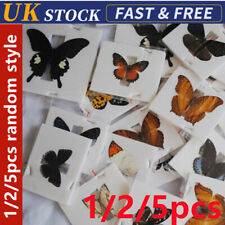 1/2/5Pcs Butterfly Specimen Folded Real Insects Wholesale Butterfly Fine UK  Fn