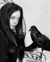 "CAROLYN JONES AS MORTICIA IN ""THE ADDAMS FAMILY"" - 8X10 PUBLICITY PHOTO (OP-250)"