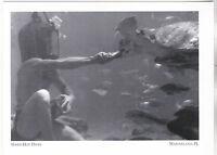 """*Postcard-""""Hard-Hat Diver"""" ...Underwater Feeding-  *Marineland, Florida (#246)"""