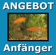 3 Ratgeber für Einsteiger: Das Aquarium/ Goldfische und Farbkarpfen / Goldfische