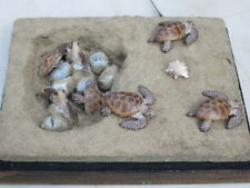 Taxidermie reproduction nid tortue de mer caouanne