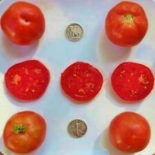 First Pick - Organic Heirloom Tomato Seeds - Very Early - 40 Seeds
