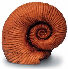 Fossile Ammoniten