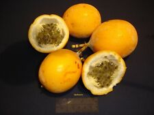 10 Graines PASSIONFRUIT - SWEET GRANADILLA Passiflora ligularis seeds
