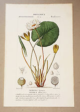 ORIGINAL Vintage BOOK PLATE Botanical Lithographic Stipple Engraving TURPIN Lily