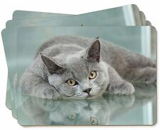 British Blue Cat Laying on Glass Picture Placemats in Gift Box, AC-11P