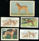 5 DOG CARDS - SALUKIS