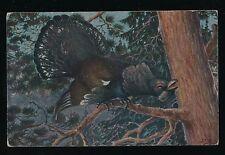Birds WESTERN CAPERCAILLIE artist drawn c1910/30s? PPC
