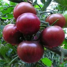 10 graines de tomate rare Green Zebra cerise cherry vegetables tomato seeds bio Plantes, graines, bulbes