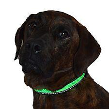 Green Jaguar Mesh Led Light Dog Collar Rechargeable - Medium Green