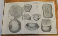 1756 Antique Print, Medical///  HORSE STOMACH CONTENTS, or, STONES