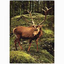 AK Natur- und Tierpark Goldau (Schweiz) Edelhirsch (Hirsch, Tiere, Zoo)