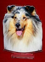 statuette photosculptée 10x15 cm chien colley 2 dog hund perro cane