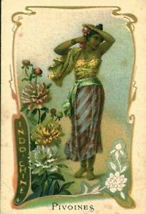 Image ancienne chromo un pays une fleur pivoines Indo-Chine  art nouveau