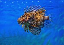 A1 Zebra Lion Fish Coral Reef Wall Art Poster Print 60 x 90cm 180gsm Gift #15828
