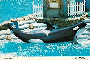 Shamu Killer Whale at Sea World Postcard