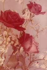 ZDJĘCIE , WIRTUALNA POCZTÓWKA , KARTKA, FREE PHOTO , PICTURE  Kwiat