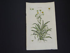 Sir John Hill, Botanical, The Vegetable System 1761-1775 Grass-Weed #07