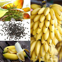 100x Rare Dwarf Banana Tree Bulk Seeds Mini Bonsai Tropical Fruits Potted Plants