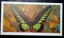 Rajah Brooke's Birdwing    Superb Tropical Butterfly Colour Card # VGC