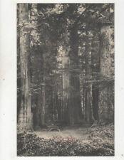 Stanley Park Vancouver Canada Vintage Postcard Us021