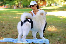 Dog Season Diaper Heat Pants - Dog Nappy Incontinence Pants for Dogs Dog Pants