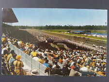Inglewood California CA Hollywood Park Horse Racing Color Chrome Postcard 1950s